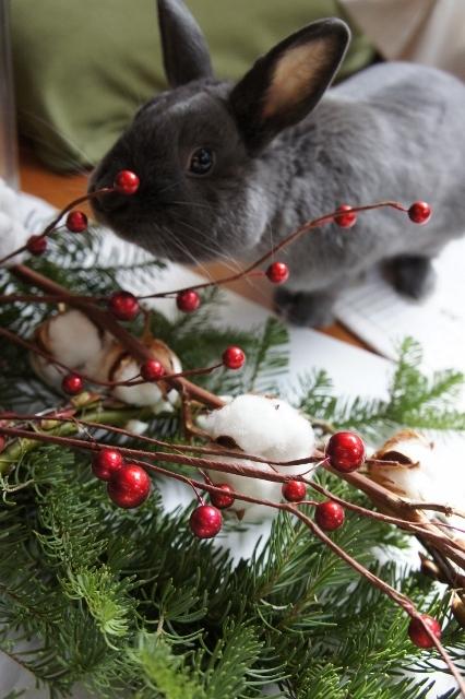 クリスマスリース2014 いたずらするこうめ
