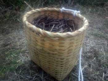 黒小豆収穫