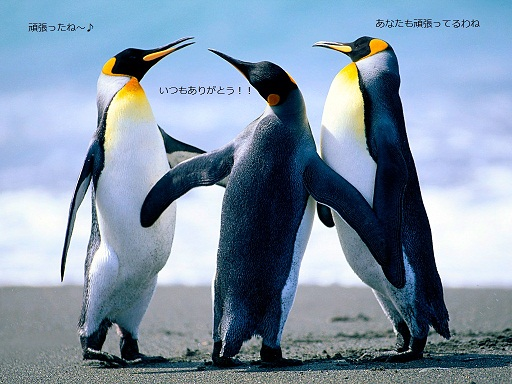 Penguins_20121116162722.jpg