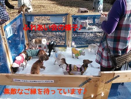 11/30 ふれあい会の様子