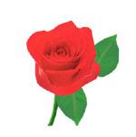 赤い薔薇J