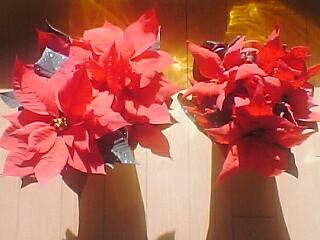 $便箋 無料 ダウンロード・便箋・桜のレターセット・封筒・クリスマスカード・ぬりえ無料・絵本・本★all無料ブログラバー-ポインセチアの写真