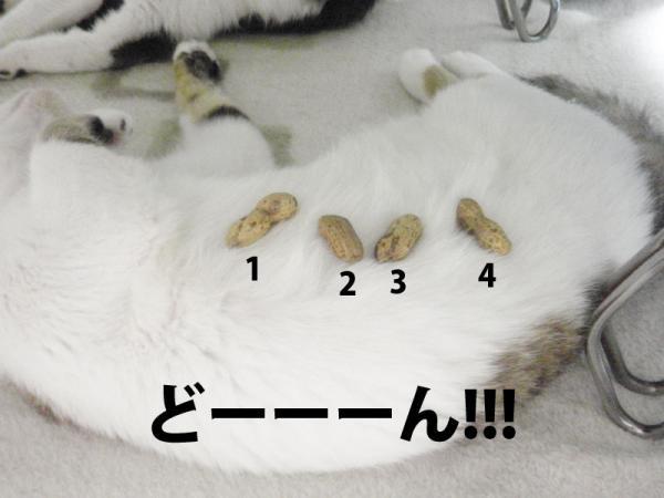 354-1.jpg
