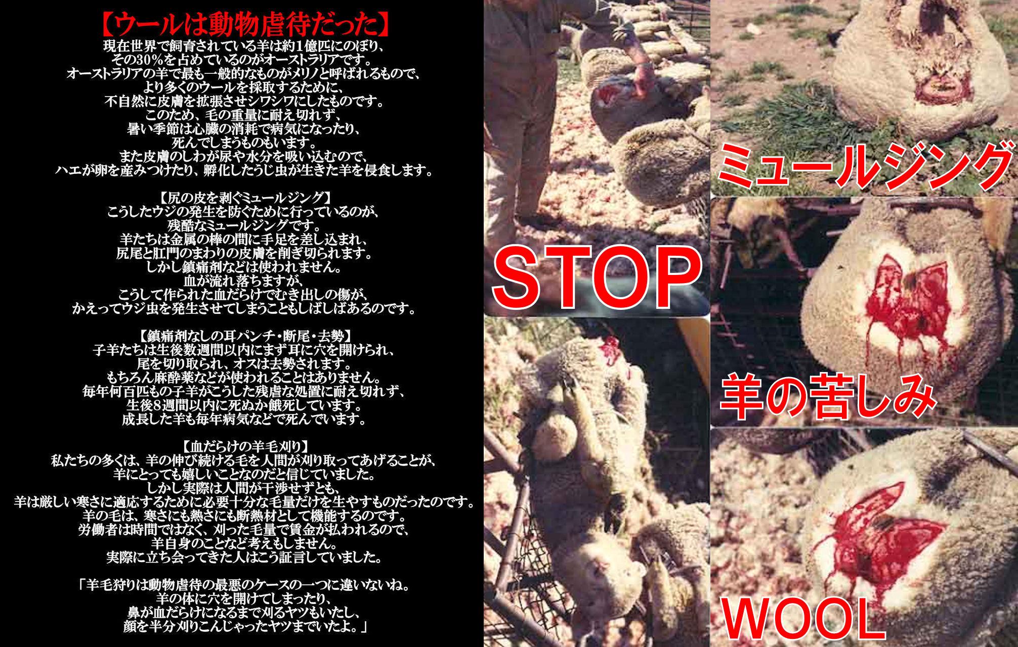 wool4_20140108224351d19.jpg