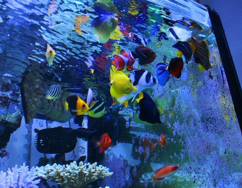 2010年9月魚