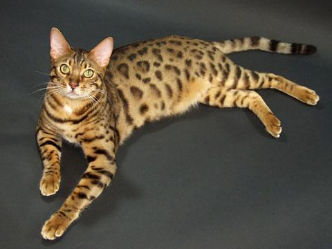 cat581.jpg