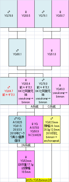 82552 2A19系統図