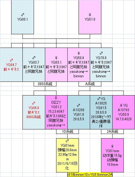 81051 2A09系統図
