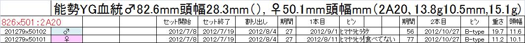 飼育管理表 2012-13 binnon825 2本目