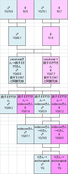 795505k様系統図