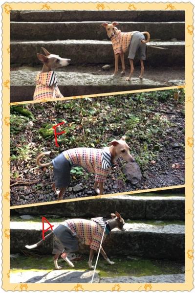 fc2blog_2012101422123776c.jpg
