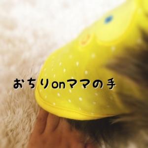 20141116183722d49.jpg