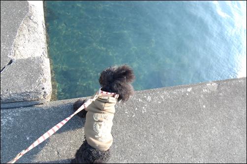 キレイな海だね