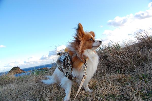風のろずさん