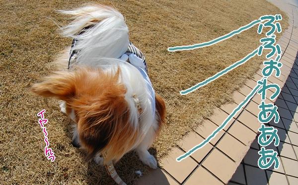 強風注意報