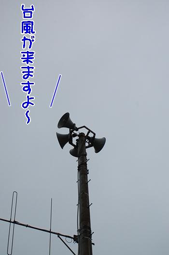 台風でッせ