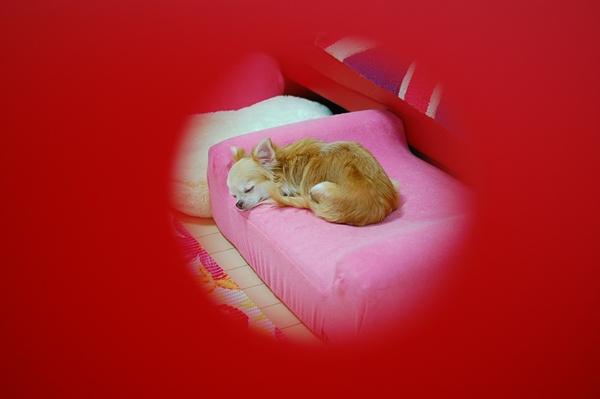 眠れる犬小屋の女王