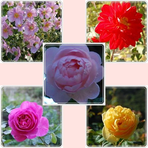バラたち2