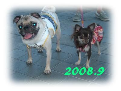 200809.jpg