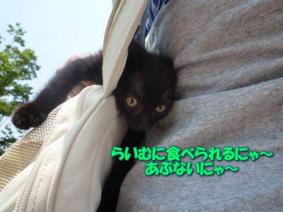image11_20110604201449.jpg