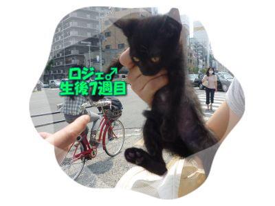 image13_20110604203218.jpg