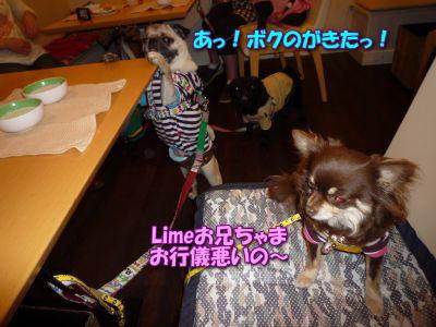 image14_20110531234157.jpg