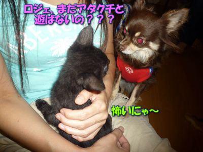image14_20110613144344.jpg