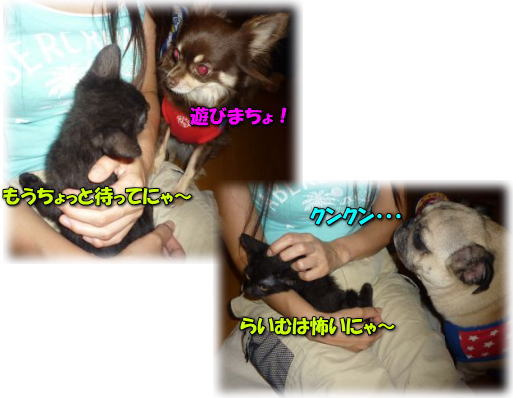 image17_20110614004301.jpg