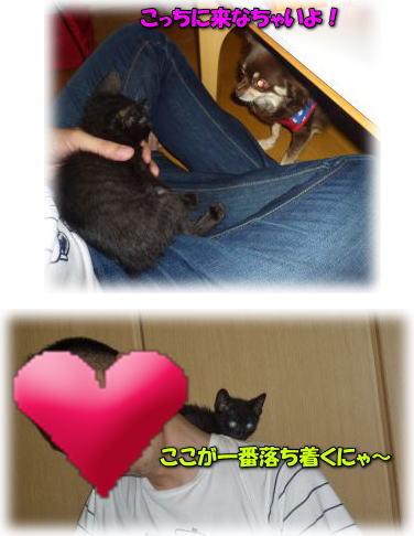 image18_20110614004301.jpg
