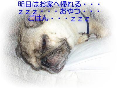 image1_20100815195613.jpg