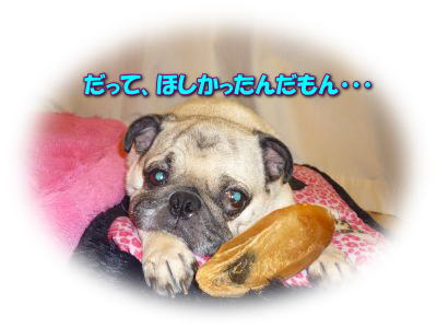 image1_20110531232315.jpg