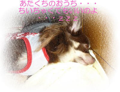 image2_20100815195613.jpg