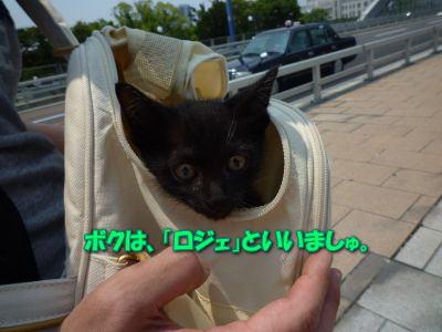image3_20110604190641.jpg