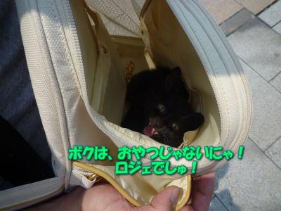 image5_20110604190641.jpg