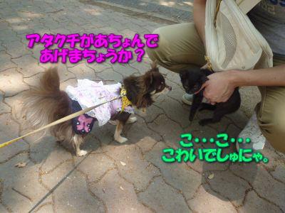 image6_20110604190641.jpg