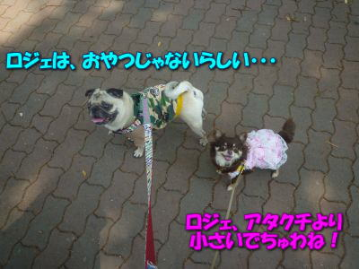 image8_20110604193253.jpg