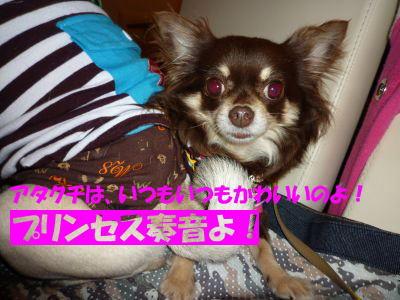 image9_20110530130927.jpg