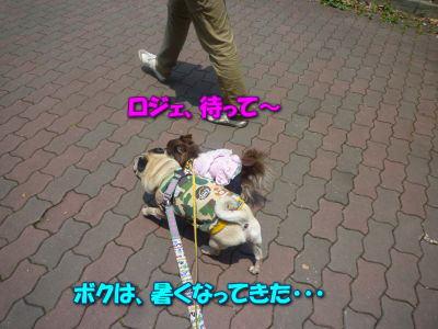image9_20110604193628.jpg