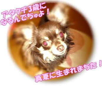 image_20100731013552.jpg
