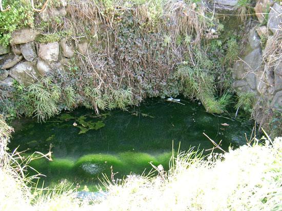 綾歌町の出水・涌井