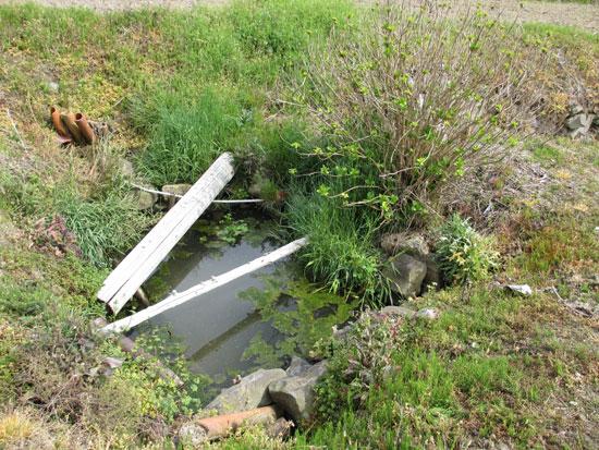 綾歌町飛熊周辺の出水