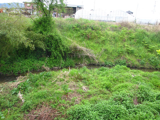 湧水の混じる小川