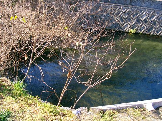 香川県丸亀市飯山町出水 湧水4