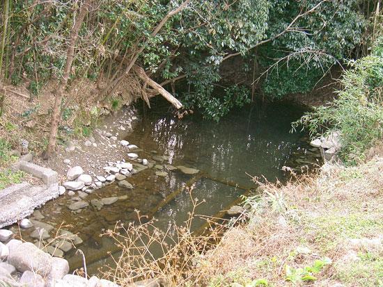 丸亀市垂水町付近の出水(湧水)