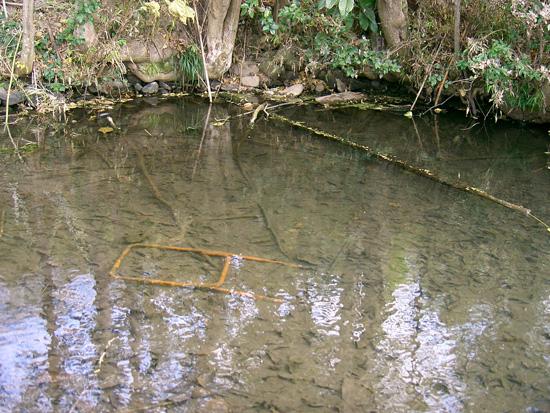 香川県丸亀市垂水町出水