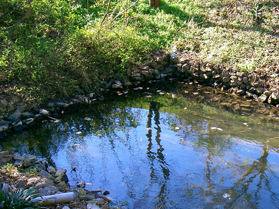 土器川生物公園近くの出水
