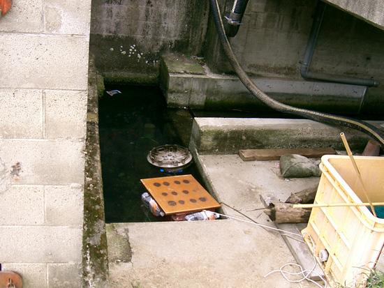 香川県善通寺市湧水 出水