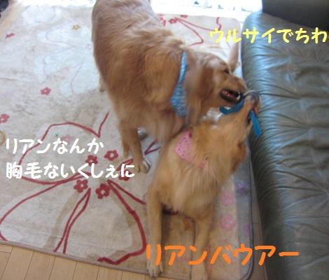 IMG_2562.jpg