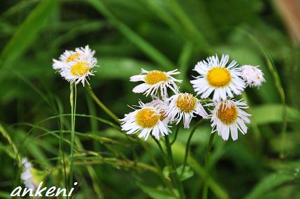 096  花