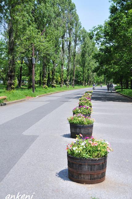002  水元公園